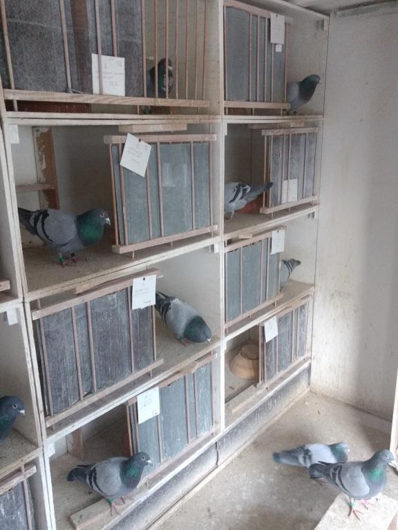 foto duiven j.w Schuurman.jpg